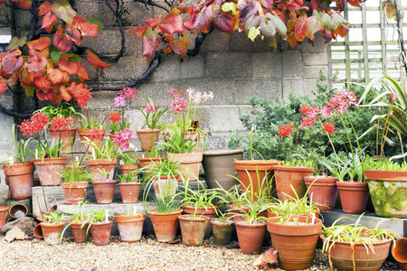 flower growing pots