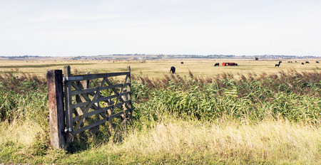 uk countryside kent sheppey farmland