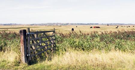 uk countryside kent sheppey farmland