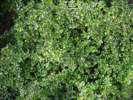 Thick green foliage- great texture or background!