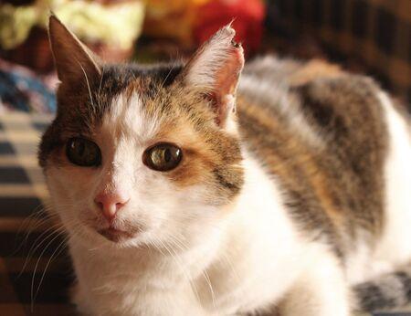 squinting: squinting Cat