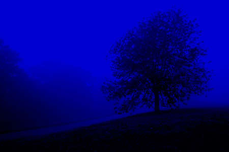 tree in autumn night Stock Photo - 2029977