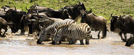 pozo de agua: Charca en el Serengeti