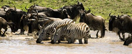 waterhole: Waterhole in Serengeti