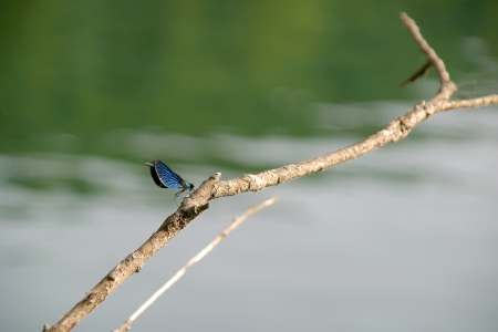 anisoptera: Anisoptera dragonfly on the branch above the lake Stock Photo