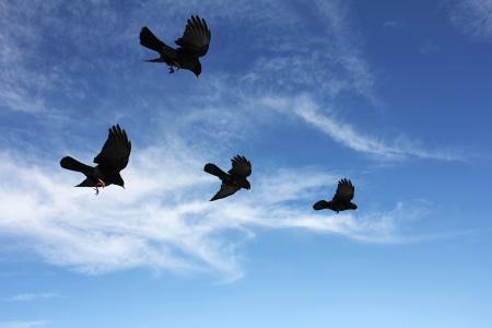 squall: Black mountain birds in flight