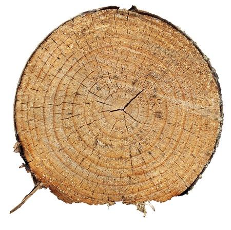 Sezione del pino