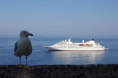 lifeboats: Gull and anchored cruise ship