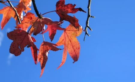 Autumn leaves with a bright blue sky background photo