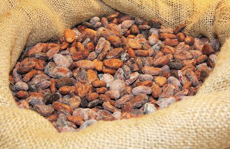 A lot of cocoa beans in a jute bag  photo