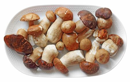 cleansed: Cleansed young autumn boletus isolated on white background Stock Photo