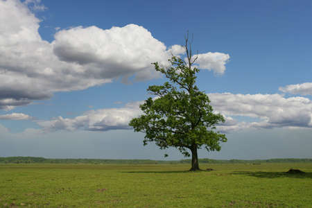 Tree in a green field on blue sky  photo