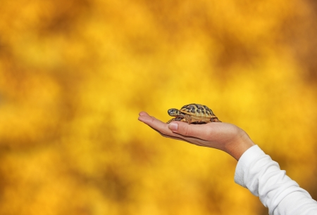 Small turtle in the palm of hand girls