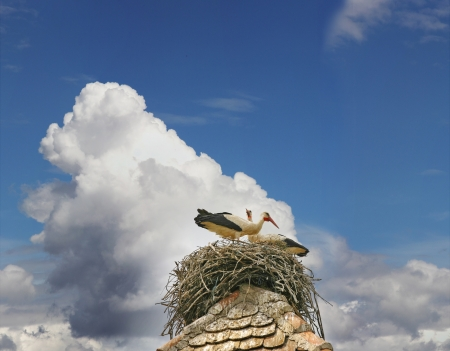 Storks build their nests at the top of the roof photo