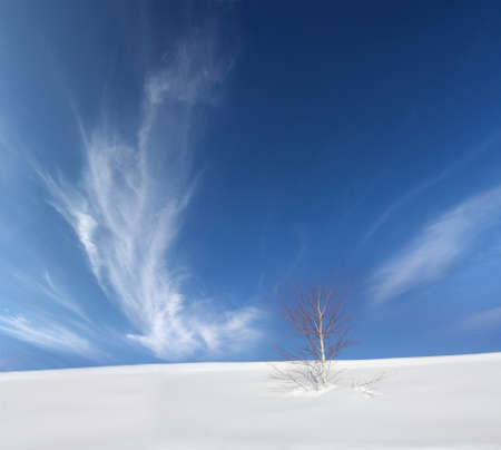 Lonely birch tree in the snow with a background of blue sky photo