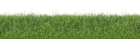 Fresh spring grass, as seamless wallpaper, isolated on a white background
