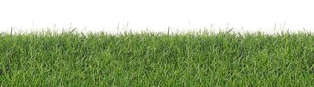 Frischer Frühling Gras als nahtlose Tapeten, auf einem weißen Hintergrund isoliert