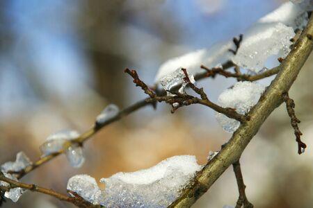 Congelato il ghiaccio sui rami si scioglie al sole