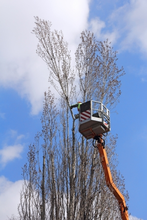 A worker with a chainsaw trim the tree branches on the high Stockfoto