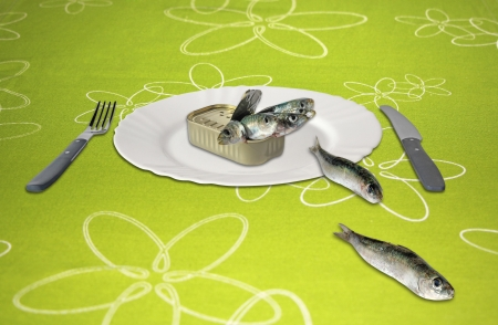 Canned sardines an empty white plate photo