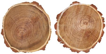 흰색 배경에 고립 된 나무 줄기의 단면