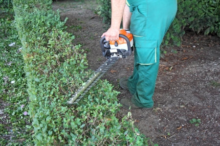 electric trimmer: A man trimming hedge in city park