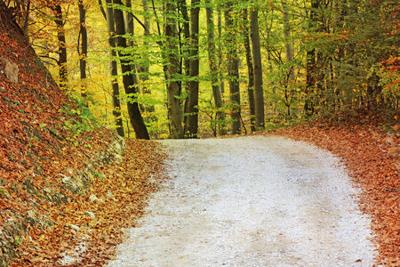 autumn path: Colorful autumn trees and leaves in forest