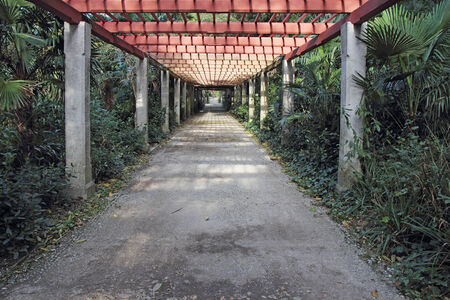 tunnel vision: Pergola passage in the garden, surrounded by various trees and plants Stock Photo