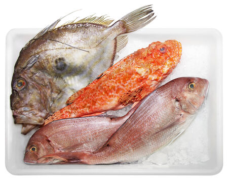 solated: Fresh Scorpaenidae, John Dory  and Dentex, quality and delicious fish, solated on white background Stock Photo