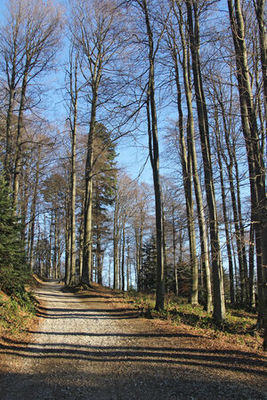 wilds: A Hiking Trail in the high beech forest