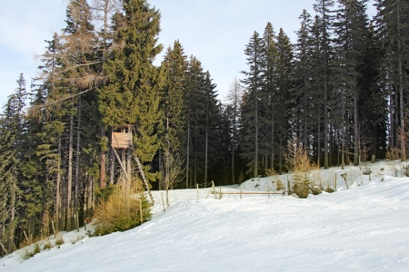 snow field: Wildlife observation point, hunting tower, on the fir tree, winter and snow