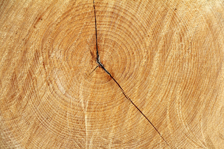 Cross section of tree trunk as a wooden background photo