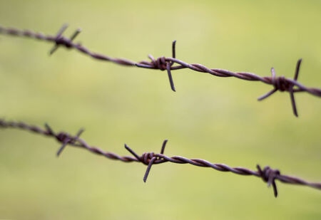 Old rusty barbed wire on a green background photo