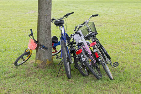 Five bicycles leaning against the tree in city park photo