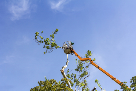 A worker with a chainsaw trimming the tree branches on the high Hydraulic mobile platform