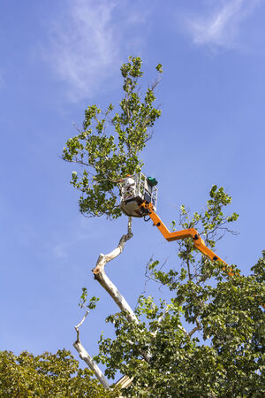 tree trimming: A worker with a chainsaw trimming the tree branches on the high Hydraulic mobile platform