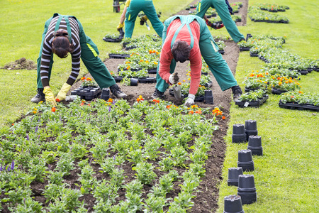fertile land: Women workers planted flowers into flower beds in in city park