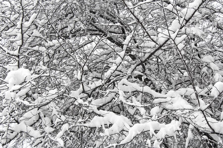 Winter branches of trees in hoarfrost on background snow and white sky photo