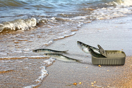 canned meat: Canned sardines fleeing from cans and seek refuge in the sea