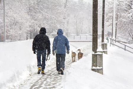 snowscene: Two men and two dogs walking on snowy blizzard Stock Photo