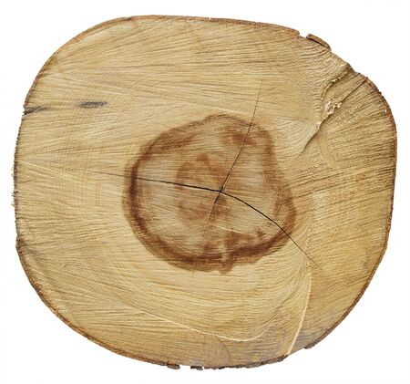 Cross section of tree trunk isolated on white background with Clipping Path