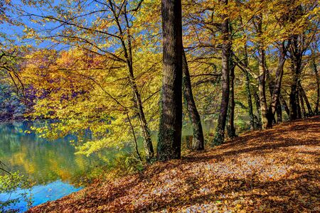autumn landscape: Colorful leaves on trees along lake in autumn, HDR image