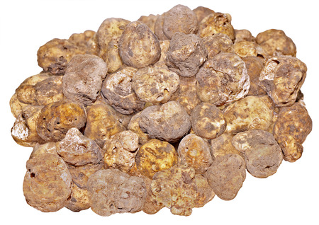delicacy: Group of delicacy white truffles isolated on white backgraund Stock Photo