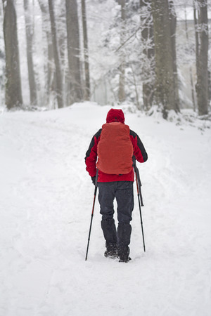 mountaineer: Mountaineer man walking in the snow forest