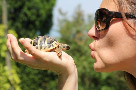 Small turtles, pet in the hands of a woman