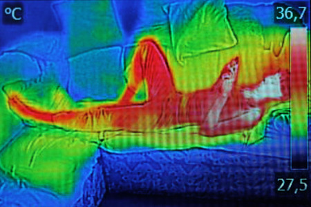 Infrared thermography image showing the heat emission when woman used smartphone or cell phone