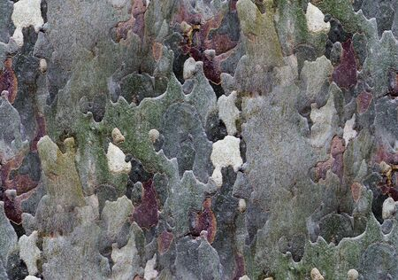 barks: Colorful tree bark as Seamless texture background
