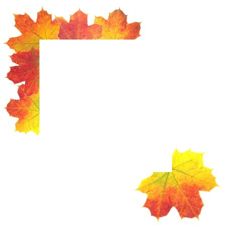 Autumn Leaves as frame on white background