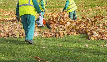 Pracownicy czyszczą opadłe jesienne liście za pomocą dmuchawy do liści
