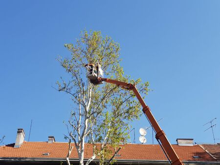 Worker with a chainsaw trimming the tree branches on the high mobile platform Stockfoto